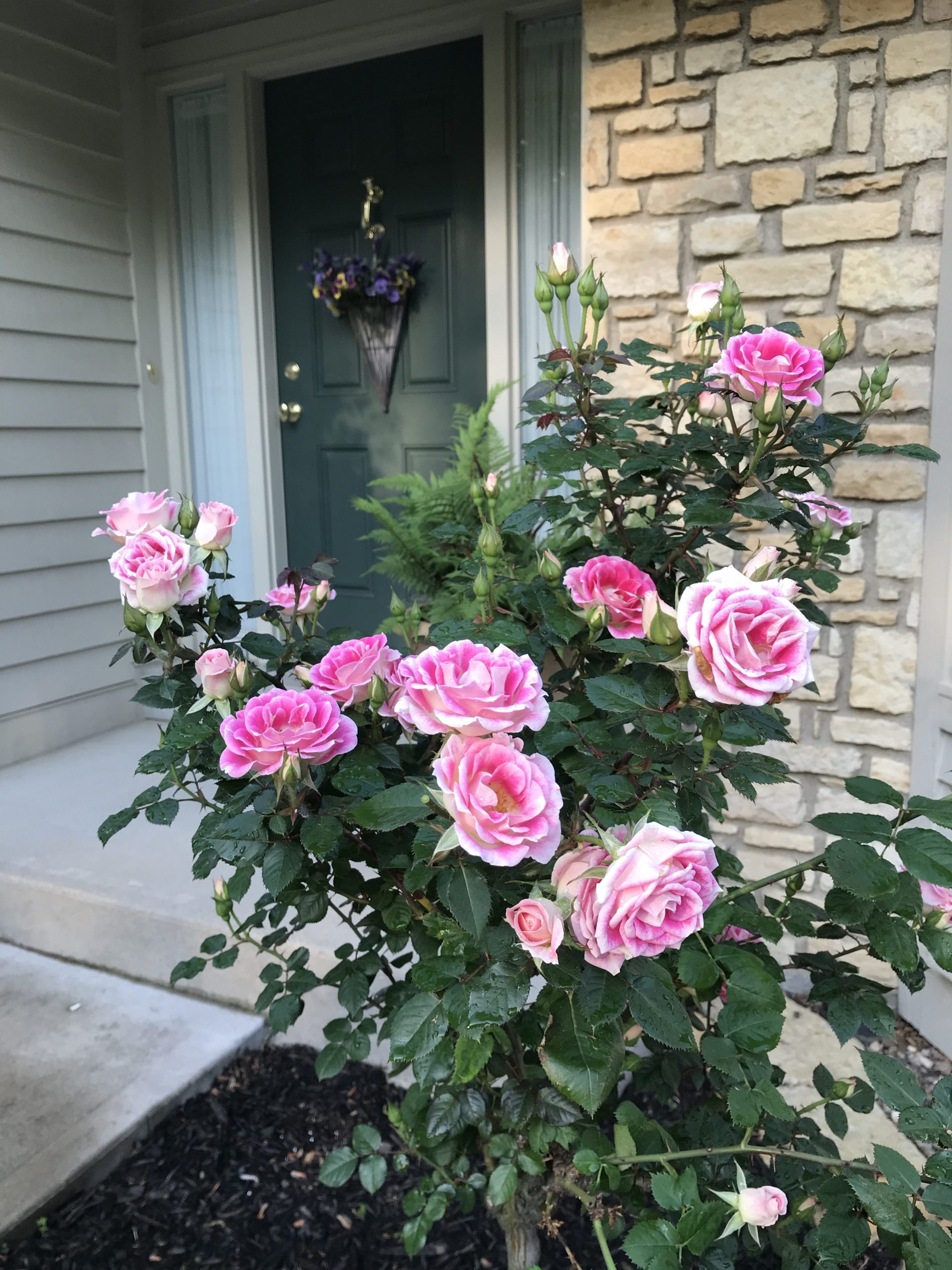 Whimsey Tree Rose